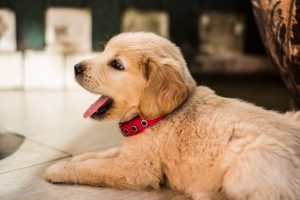 Essential Dog Care Tips Everyone Should Know
